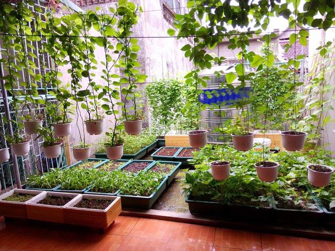Vườn sân thượng xanh mướt - Thiết kế nhà biệt thự